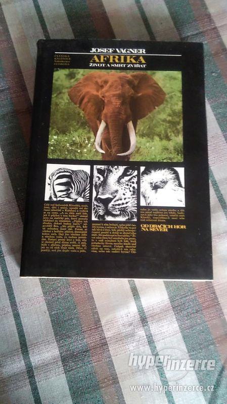 Afrika - život a smrt zvířat - foto 1