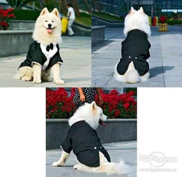 Psí oblek