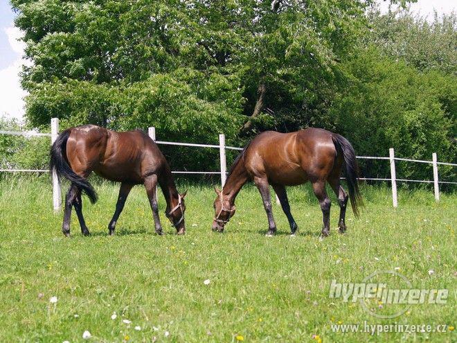 Ustájení koní Horní Benešov - Bruntálsko