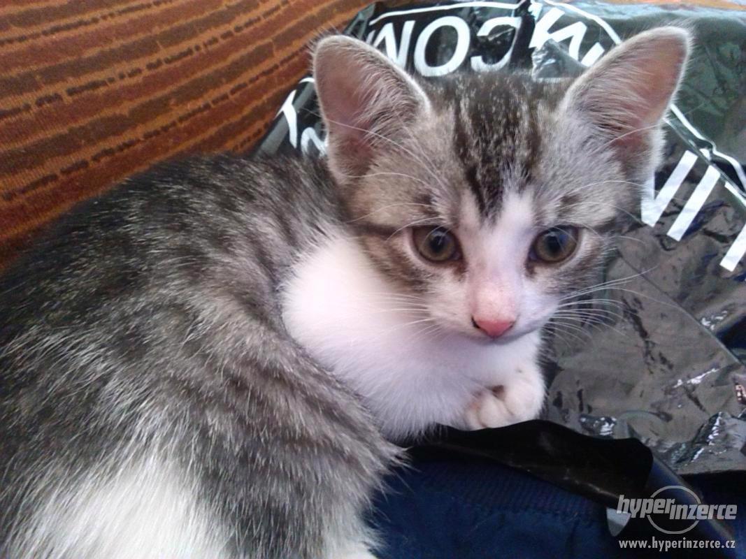 Daruji koťátka - foto 1