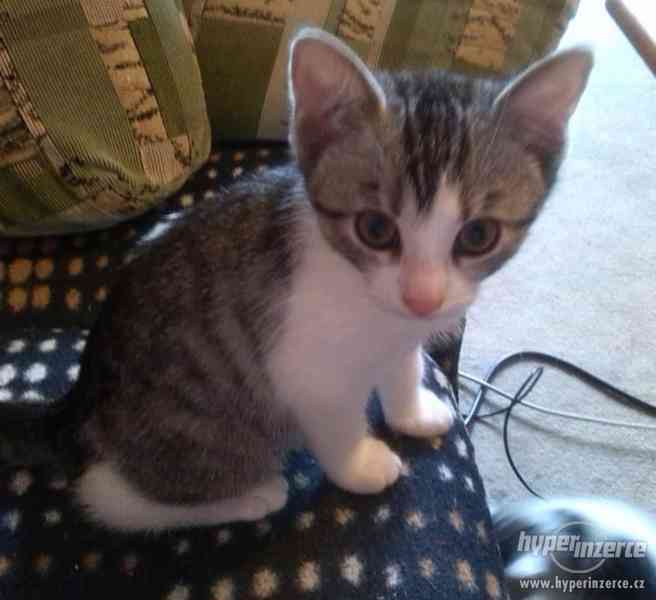 Daruji koťátka - foto 2