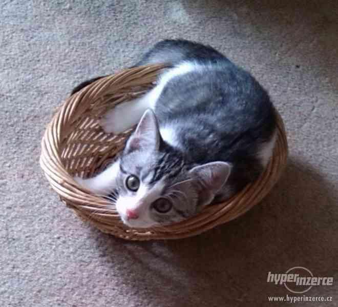 Daruji koťátka - foto 3