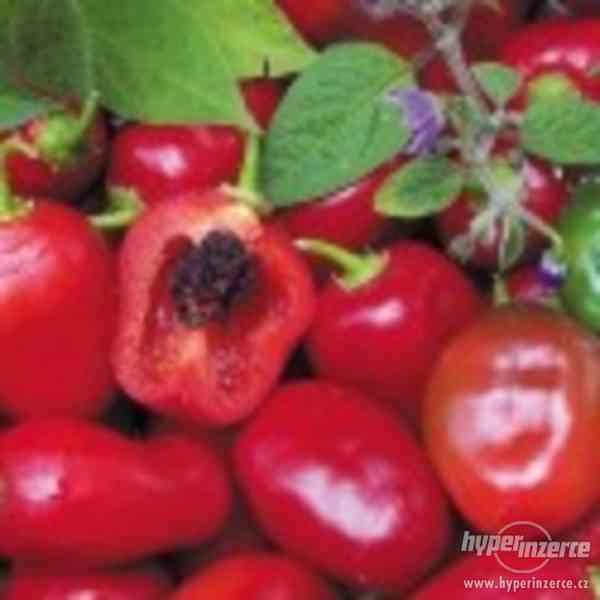 Chilli Rocoto red - semena