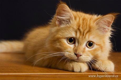 Pojištění koček