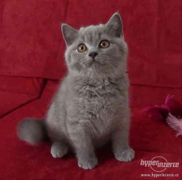 Vymazlená Britská koťátka s PP
