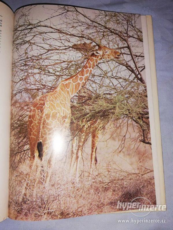 AFRIKA ŽIVOT A SMRT ZVÍŘAT - JOSEF VAGNER - foto 7
