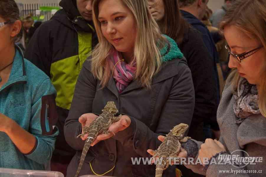 Burza terarijních zvířat v Praze na Pankráci