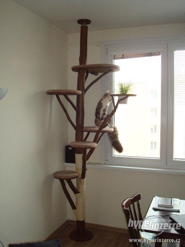 kočičí strom/škrabadlo/kočka/koťata
