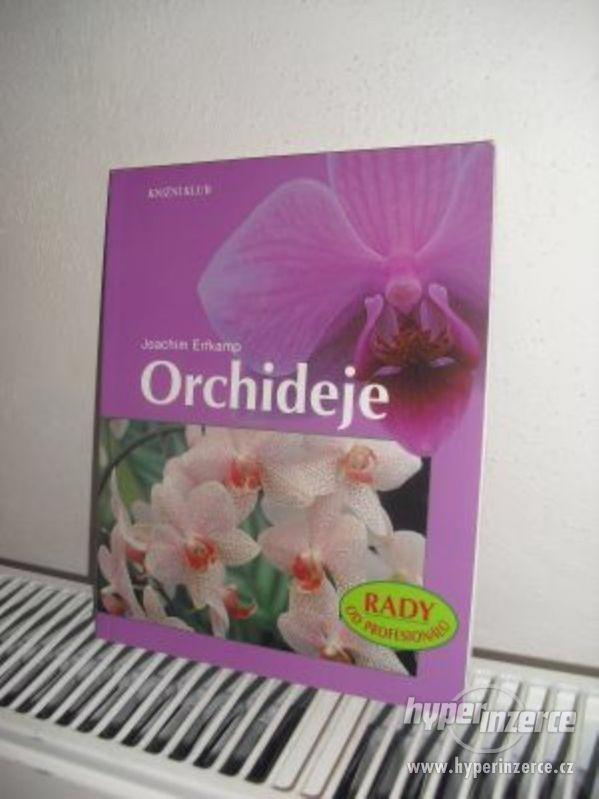 Joachim Erfkamp – Orchideje