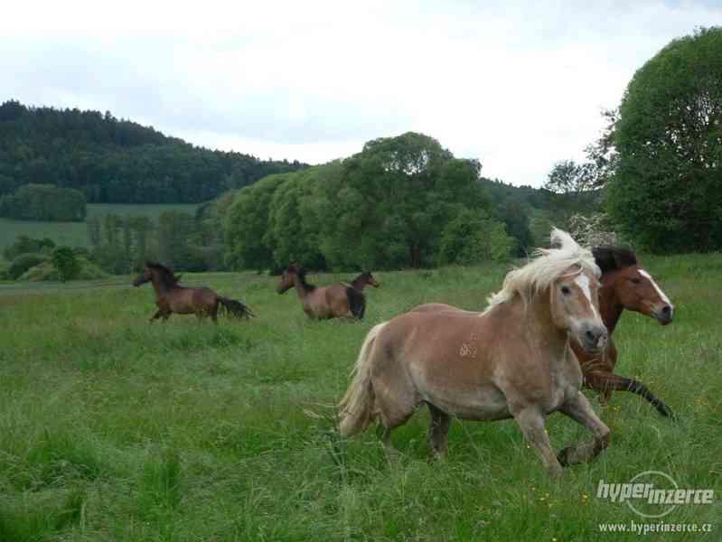 Prázdniny s koňmi- Tábor Koně v Trní - foto 8