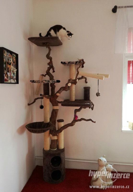 Kočičí strom (škrabadlo)