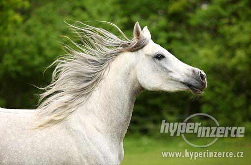 Pojištění koně