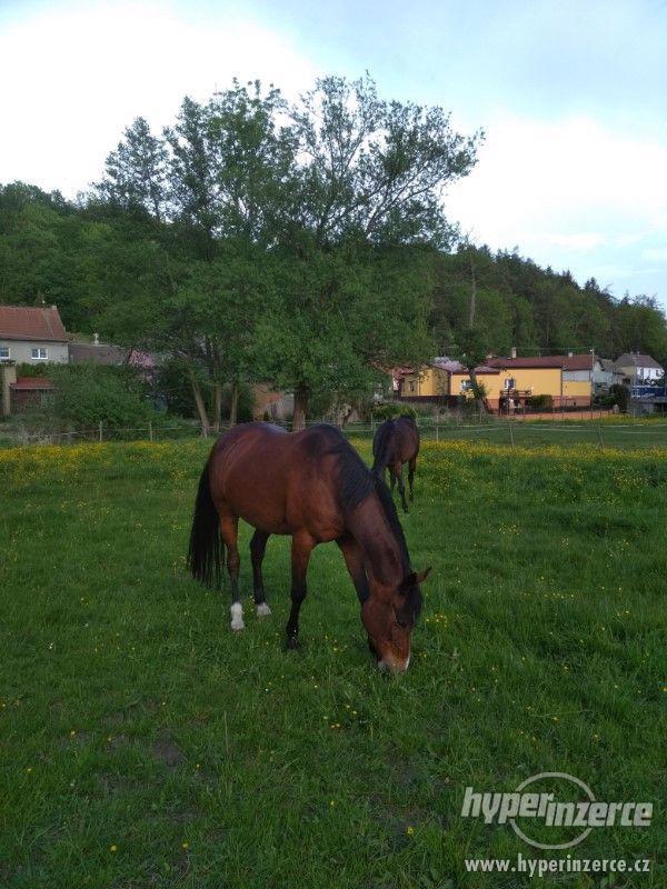 Ustájení koní - foto 1