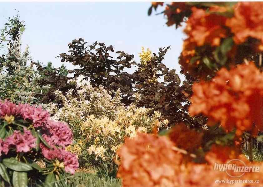 Nabízím velké okrasné rostliny a jehličnany pro výsatbu