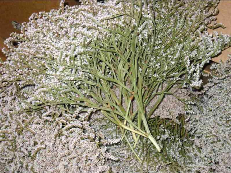 Prodám statici tatariku z letošní sklizně(příjem objednávek) - foto 7