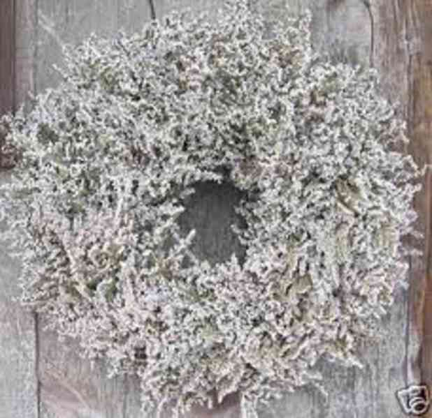 Prodám statici tatariku z letošní sklizně(příjem objednávek) - foto 5