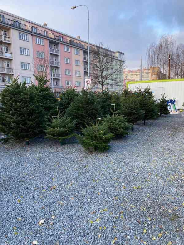 Vánoční stromky - Jedle kavkazská Nordmann (TOP KVALITA) - foto 8