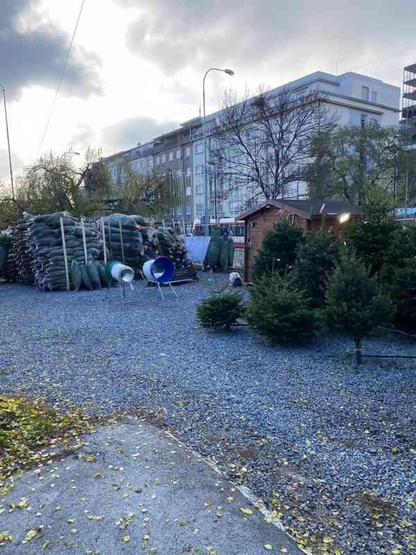 Vánoční stromky - Jedle kavkazská Nordmann (TOP KVALITA) - foto 9
