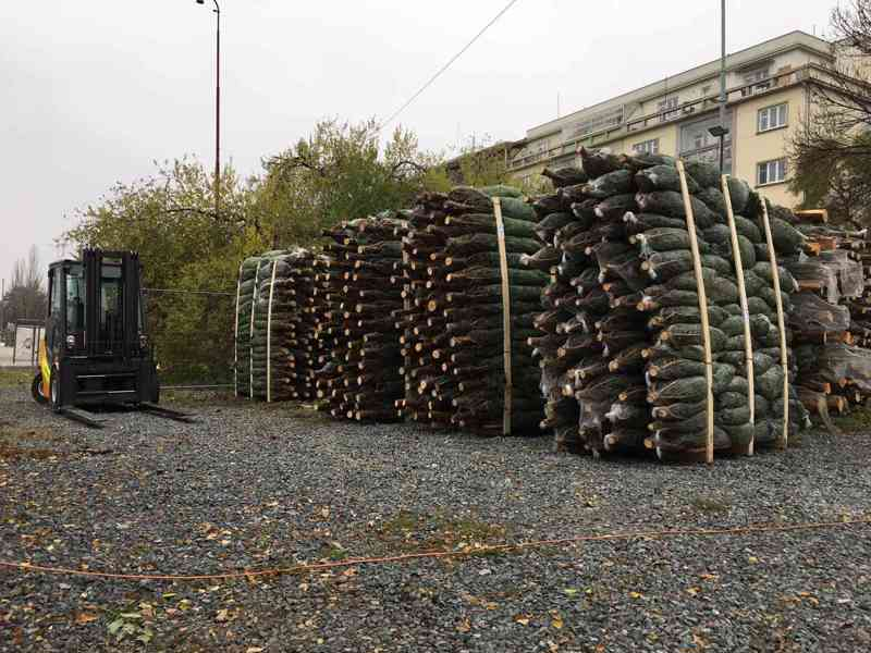 Vánoční stromky - Jedle kavkazská Nordmann (TOP KVALITA) - foto 4