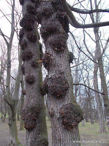 Sháním fošny, kmeny tvrdého dřeva - foto 1
