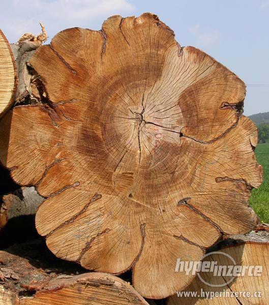 Sháním fošny, kmeny tvrdého dřeva - foto 2