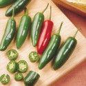 chilli paprička Serano - semena