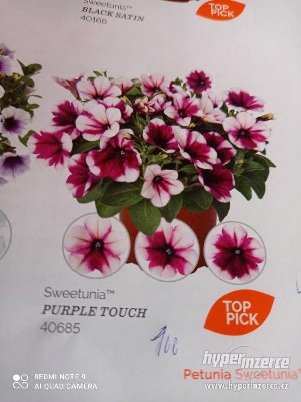 Zahradnictví Valinová MiniFamous double Purple Red - foto 9