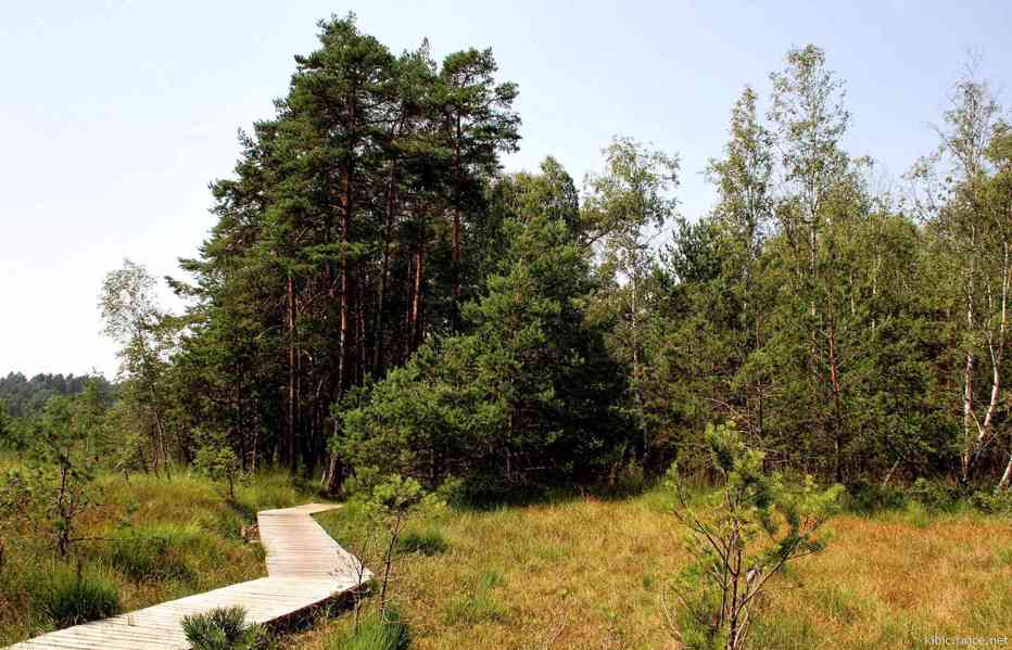 Ubytování Máchovo jezero 2021 - foto 15