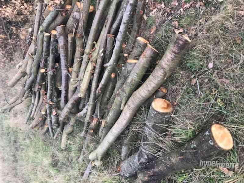 Prodej tvrdého dřeva levně