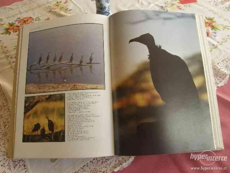 Afrika - Život a smrt zvířat - foto 7