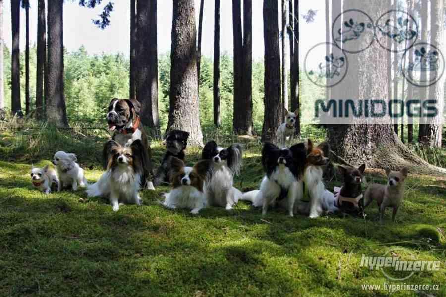 MINIDOGS - psí hotel, školka a salon pro pejsky - Praha 9