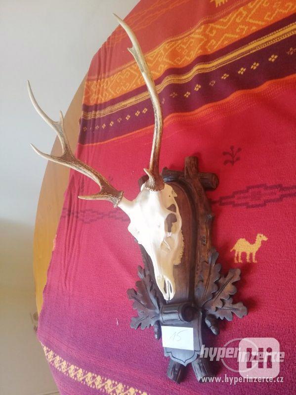 lovecké trofeje - foto 1