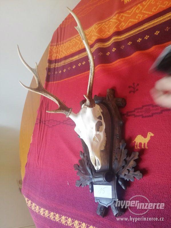 lovecké trofeje - foto 2