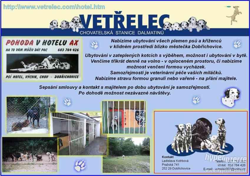 Hotel pro psy - psí hotel Hotel AX