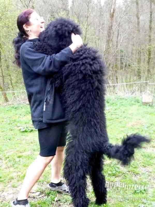 Hlídání,trénink,výchova, převýchova  psů .Litoměřice,Benešov - foto 4