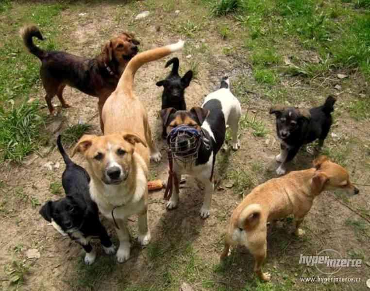 Hlídání,trénink,výchova, převýchova  psů .Litoměřice,Benešov - foto 6