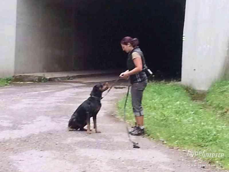Hlídání,trénink,výchova, převýchova  psů .Litoměřice,Benešov - foto 7
