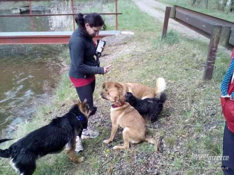 Hlídání,trénink,výchova, převýchova  psů .Litoměřice,Benešov - foto 8