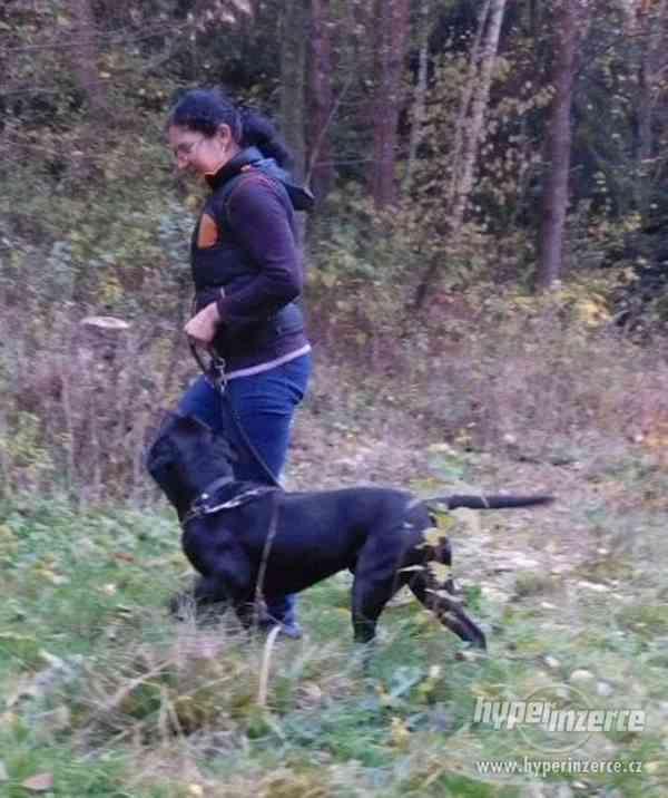Hlídání,trénink,výchova, převýchova  psů .Litoměřice,Benešov - foto 10