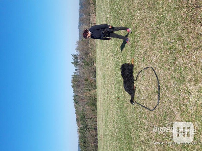 Hlídání,trénink,výchova, převýchova  psů .Litoměřice,Benešov - foto 3