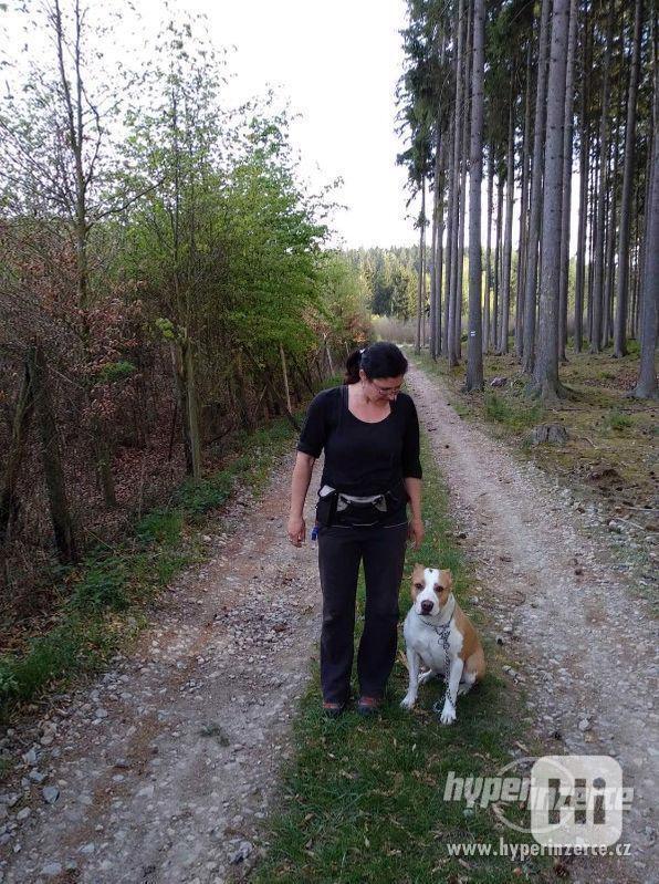Hlídání,trénink,výchova, převýchova  psů .Litoměřice,Benešov - foto 5
