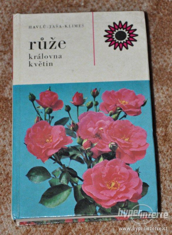 kniha Růže - královna květin