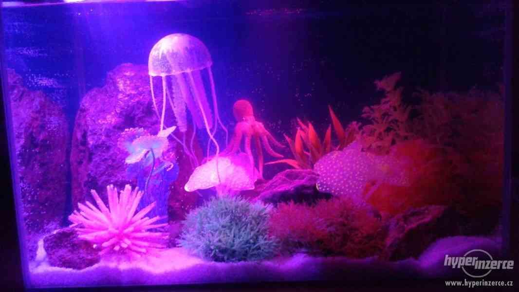 kytky,lodě, potřeby akvárium