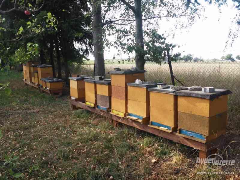 Včely, vyzimovana včelstva