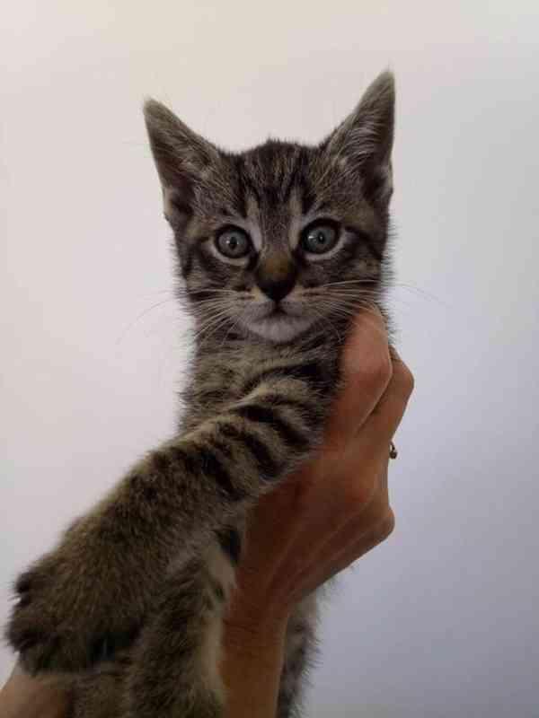 Prodám koťata  - foto 2