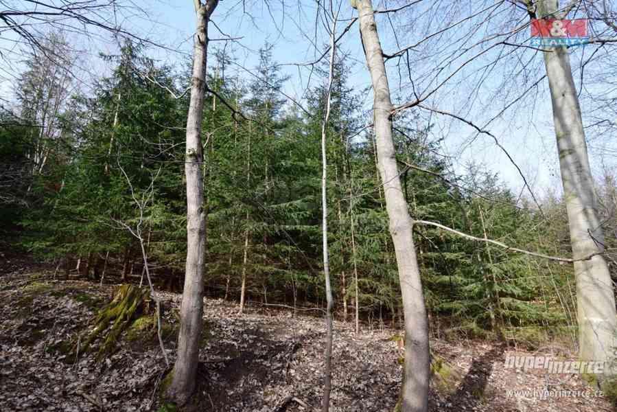 Prodej lesa, 103591 m?, Doudleby nad Orlicí - foto 3