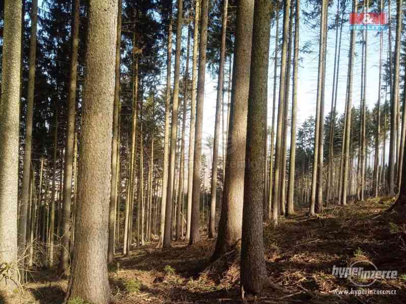 Prodej lesa, 103591 m?, Doudleby nad Orlicí - foto 5