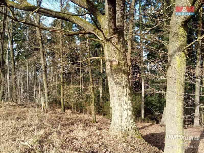 Prodej lesa, 103591 m?, Doudleby nad Orlicí - foto 6