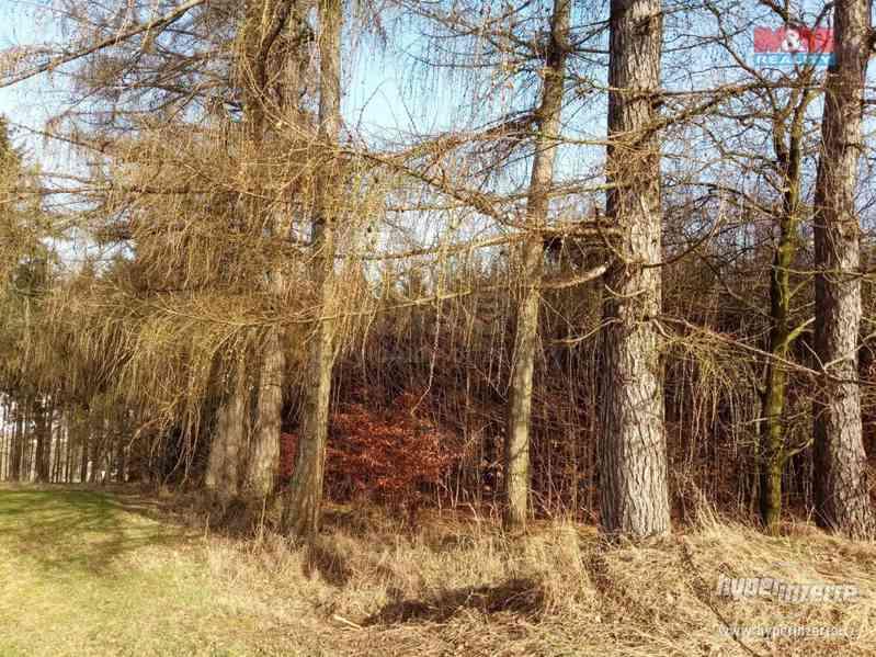 Prodej lesa, 103591 m?, Doudleby nad Orlicí - foto 7