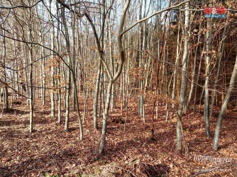 Prodej lesa, 103591 m?, Doudleby nad Orlicí - foto 8